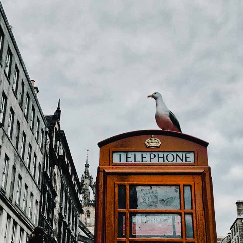 A seagull sitting on top of an old fashioned london phonebox